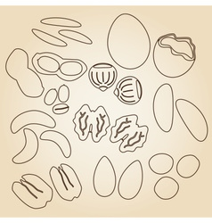 Various nuts types brown outline icons set eps10 vector