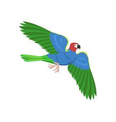 cartoon parrot flying bird vector image