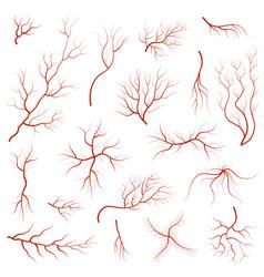 cartoon vein blood set vector image vector image