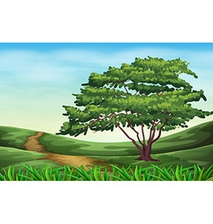 A beautiful landscape with a tall tree vector image