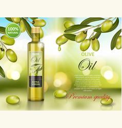 olive oil bottle design on green shiny background vector image