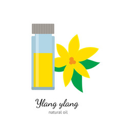 ylang-ylang essential oil with flowers isolated on vector image