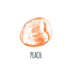 hand drawn peach on white background vector image