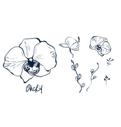 Hand drawn set silhouette orchid vector
