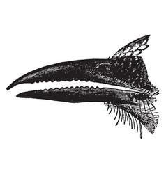 Motmot beak vintage vector