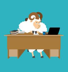 ram boss sheep businessman at desk farm office vector image
