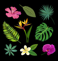 tropical plants set palm leaves and exotic vector image