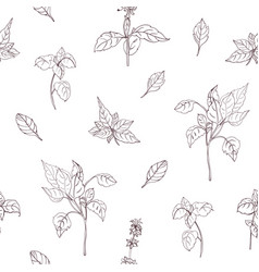 elegant natural seamless pattern with basil leaves vector image