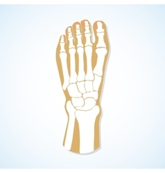 Flat design of foot and skeleton vector