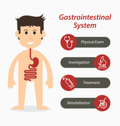 Gastrointestinal system and medical line icon vector