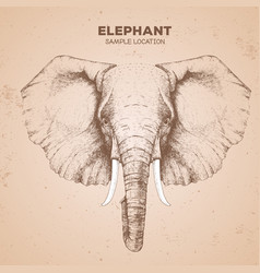 Hipster animal elephant hand drawing muzzle vector