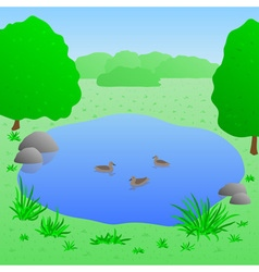 Lake with ducks vector image
