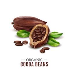 realistic cocoa composition vector image