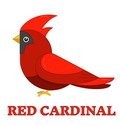 Red Cardinal Colorful Icon vector image