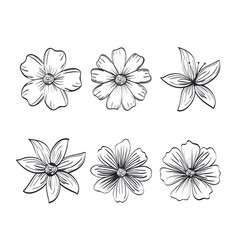 Set flowers rustic and monochrome decoration vector