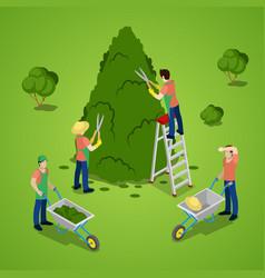 Isometric people trimming tree gardener working vector