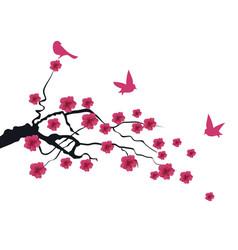 cherry bird vector image