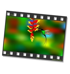 Film frame with hummingbird vector image