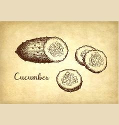Ink sketch cucumber vector