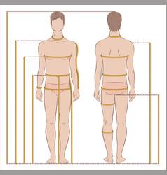 Man body measurement vector