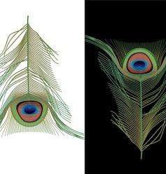 Peacock feather vector