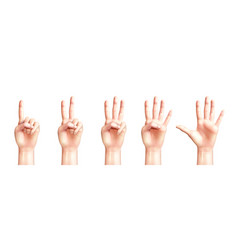 realistic hands counting from one to five vector image