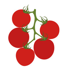tomatoes on branch isolated on white vector image