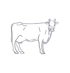 Cow on white background animal farm vector