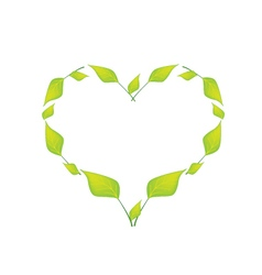 Green leaves in a beautiful heart shape vector