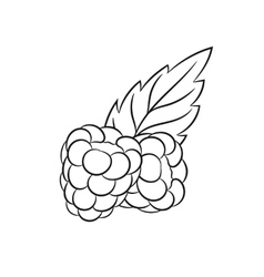 Hand drawn raspberries sketches vector image