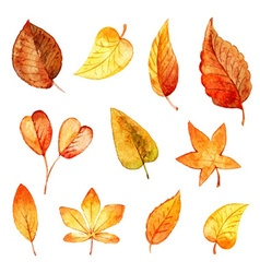 Set autumn leaves watercolor vector image