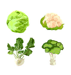 set of cabbages vector image