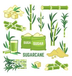 Sugar plant agricultural crops cane leaf vector