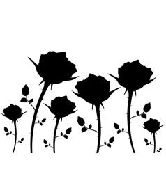 silhouettes of flowers roses on a white background vector image vector image