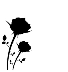 silhouette of two roses on a white background vector image