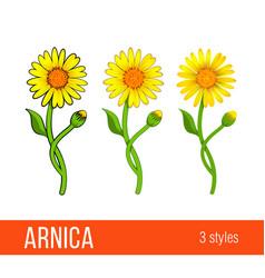 Arnica flower set different styles vector