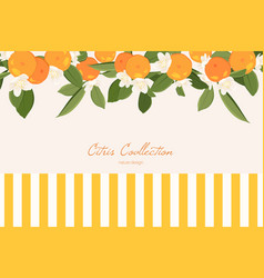 mandarin horizontal banner vector image