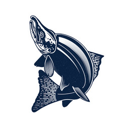 sockeye salmon logo isolated on vector image