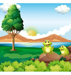 Two frogs above the rock near the river vector