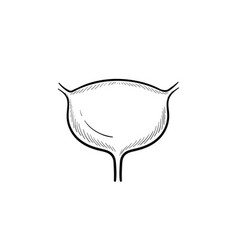 urinary bladder hand drawn outline doodle icon vector image