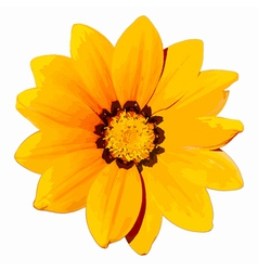 Yellow Flower Head vector image