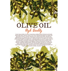 olive oil sketch poster with green leaf and fruit vector image vector image