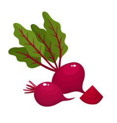 Bright of fresh beets isolated vector