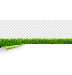 green grass with green corner transparent vector image