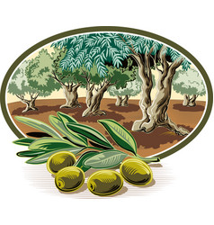 Olives on a branch vector