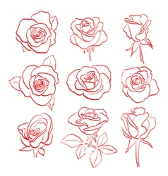 Set of beautiful red roses - contours vector