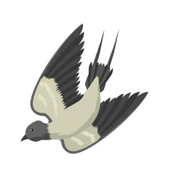 swallow isolated bird vector image vector image