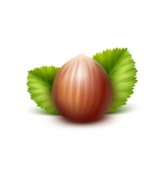 Full Unpeeled Hazelnut with Leaves Isolated vector image