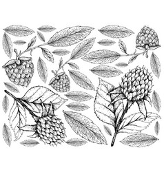 hand drawn of korean black raspberries and golden vector image