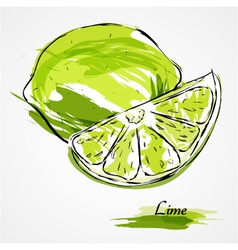Lime fruit vector